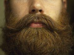 et sa barbe, presque trop belle pour être vraie.