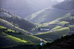 Steep slopes crisscrossed with vineyard terraces in the Douro region in northern Portugal. Douro Valley, Portugal