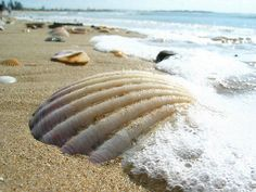 Beach/shells ,cool picture!