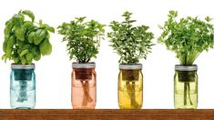 Mother Nature has offered us so many herbs with a powerful health benefits and great flavor and it would be great if we can use them fresh throughout the entire ... Mason Jar Herbs, Mason Jar Herb Garden, Herb Garden Pallet, Herb Garden In Kitchen, Kitchen Plants, Diy Herb Garden, Garden Ideas, Herbs Garden, Garden Types