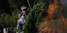 By Johann Hari  Across the world, more and more people are asking: Why is marijuana banned? Why are people still sent to prison for using or selling it?  Most of us assume it's because someone, som...