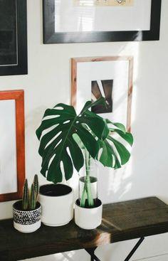 Decorar con hojas verdes ¿Eres de los que les cuesta mantener viva una planta? Pues este post es para ti! El elemento vegetal dentro de la decoración de una casa es fundamental. Aporta frescura y el toque natural necesario para transmitir hogar, calidez y armonía a las estancias. Pero claro,