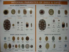 parasites Cat Biting, Intestinal Parasites, Medication For Dogs, Veterinary Technician, Vet Med, Medical Technology, Veterinary Medicine, Clinic, Animals And Pets