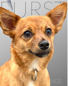 Dog Grooming Salons, Luxury Spa, Photo Galleries, Corgi, Fox, Animals, Gallery, Corgis, Animales