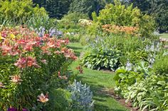 Hummingbird Garden Plans. Creating a Hummingbird Garden.