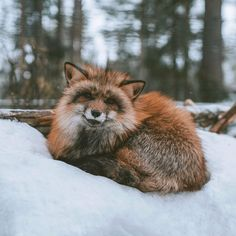 Everything Fox - What a cool looking fox! Taken from /r/foxes