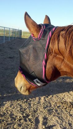 Custom Horse Fly Mask - Size Medium - Black Mesh with Pink Zebra print trim
