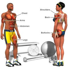 Muscle exercises explained with 3D videos.  This is awesome.