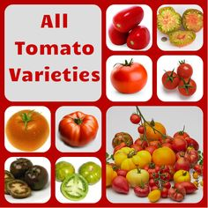 We Currently have 15% off all Tomato orders for next year @ www.tomato-plants-direct.co.uk Tomato Plants, Vegetables, Food, Veggie Food, Vegetable Recipes, Meals, Veggies