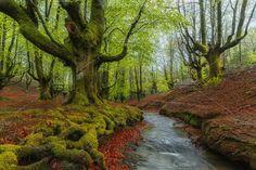 Otzarreta Forest Photos Otzarreta Forest by PhotoNature