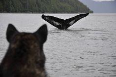 WWF trip to the B.C. coast, dog and whale