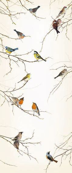 bird wallpaper would love to use this in a guest bathroom... idea