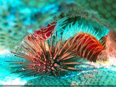 Blötdjur - gratis skrivbordsbilder: http://wallpapic.se/havet-och-havet/blotdjur/wallpaper-11390