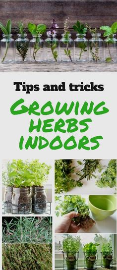 It's not difficult to grow herbs indoors. Try these ideas and find the one that suits you the most!