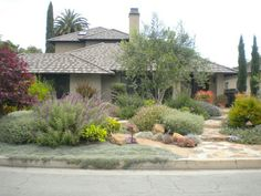 Lush looking drought tolerant yard.