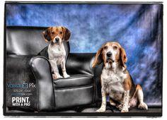 Pet Portraits by Valvano Pix