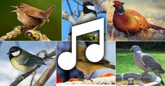 Bird songs and bird calls - the sounds of 257 UK bird species. Birdhouse In Your Soul, Bird Calls, Learning Websites, Garden Animals, All Birds, Bird Species, Bird Houses, Teaching Kids, Science Nature