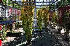 Jardines Que Me Gustan: Plazas urbanas y el anhelo de lo natural