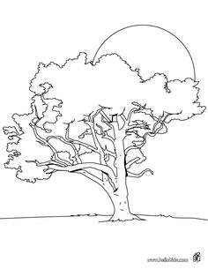 TREE coloring pages - Oak tree