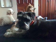 Mis perritos queridos