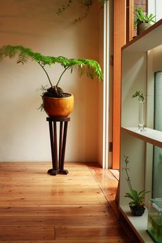 love this, plant, pot, stand and all.