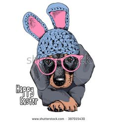 The poster with the portrait of the dog Dachshund in the bunny hat and with glasses. Vector illustration.