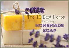 I love using herbs in my homemade soap recipes. They add texture, scent, and many benefits for skin. Most herbs can be used, but some are better than others.