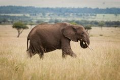 When you save an elephant, you save way more than an elephant