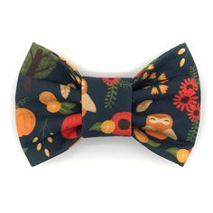 aae123da1a25 13 Best Rodger bow ties images | Dog bows, Dog bow ties, Cat bow tie