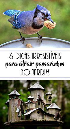 Que tal alegrar o seu jardim com visitantes ilustres? Conheça aqui as principais dicas para atrair passarinhos para o seu jardim.  #birdhouse #birdfeed #passarinhos #jardim #jardinagem #paisagismo