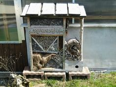 Diy Insektenhotel selbst gemacht