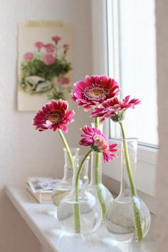 Pink gerberas on the window sill.