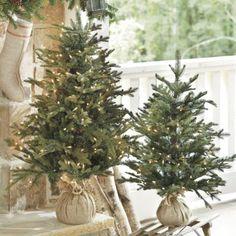 wrap mini trees in burlap - cute for Christmas decor