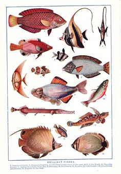 This color plate comes from a 1909 Encyclopedia. This would look great in your childs room! Page measures aprox. 6.25x9.25    For sale is the actual