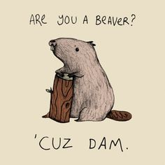 LOL funny cute shirt beaver pick-up line cuz dam Punny Puns, Puns Jokes, Corny Jokes, Dad Jokes, Funny Memes, Pick Up Lines Cheesy, Pick Up Lines Funny, Funny Pickup Lines, Sweet Pick Up Lines
