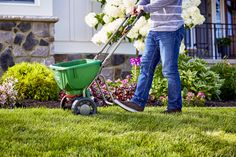 Learn what you need to do for a lush lawn all year round with Scotts easy seasonal lawn care guide.