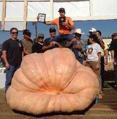 How to Grow Giant Pumpkins, Growing Giant Pumpkin Seeds Plants Planting Pumpkins, Planting Seeds, Fruit Garden, Edible Garden, Fruit And Veg, Fruits And Vegetables, Giant Pumpkin Seeds, Pumpkin Vegetable, Pumpkin Plants