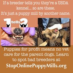 USDA means nothing. other than you're for sure dealing with a puppy mill. Hurt Locker, Stop Animal Cruelty, Puppy Mills, Animal Welfare, Animal Rights, Pet Store, Amish, Christian Quotes, Beautiful Creatures