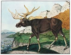 The Bestiarium of Aloys Zötl (1831-1887)  These beautiful watercolours come from the Austrian painter Aloys Zötl's Bestiarium, a series of exquisite paintings of various animals undertaken from 1831 through until his death in 1887.