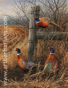 Pheasants in the field - ANIMAUX:oiseaux-birds Pretty Birds, Beautiful Birds, Animals Beautiful, Pheasant Hunting, Coyote Hunting, Archery Hunting, Game Birds, Tier Fotos, Wildlife Art