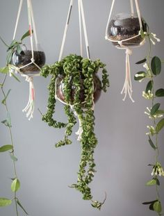 create modern macrame hangers for indoor and outdoor plants