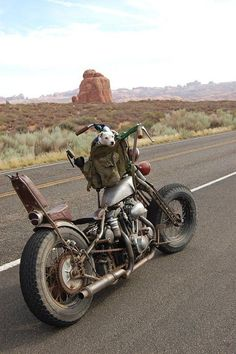 along for the ride... #motorcycle #motorbike: