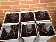 Cómo proteger tus semillas recién germinadas