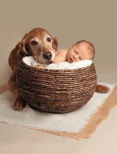 Adorable!   #dog #dogandme   http://www.petrashop.com/
