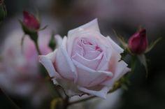 IL MODO COMPANY Neon Fiore Rosa Fiore a forma di paillettes Top L S M