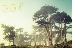 Coastal Fog San Francisco Forest Through the by #LoudWaterfallPhoto #fpoe #photography