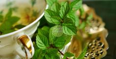 Mint (pudina) herbs have amazing benefits which none can know until they consume it. For example, you can think of the Pudin Hara that you drink or gulp down when you feel stomach upset. Psoriasis Remedies, Herbal Remedies, Health Remedies, Home Remedies, Natural Remedies, Nail Psoriasis, Weight Loss Tea, Halitosis, Troubles Digestifs