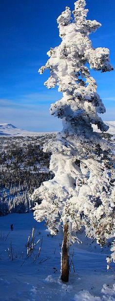 FROZEN RUSSIA WINTERSCENIC /  LANDSCAPE  #by Anton Belovodchenko #snow tree nature amazing sky blue white