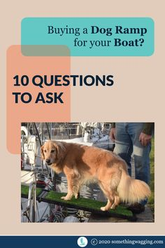 Could your dog use some help getting on and off the boat? Or up and down the companionway? Ask these 10 questions so you don't make a big mistake. Sailboat Living, Living On A Boat, Dogs On Boats, Pet Ramp, Buy A Dog, Best Boats, Marine Environment, Kinds Of Dogs, Health And Safety