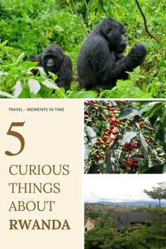 5 Curious Things Abo